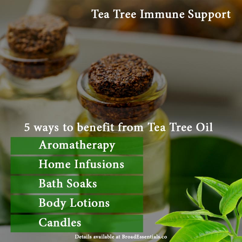 Best ways to benefit from Tea Tree Immune System Support